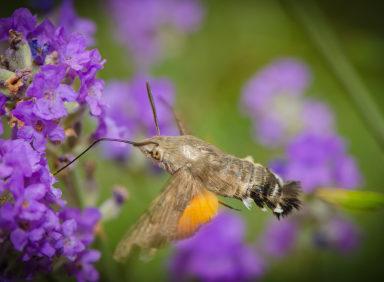 Moths Omaha, Nebraska