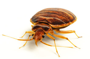 Bed bug exterminator in Omaha, NE
