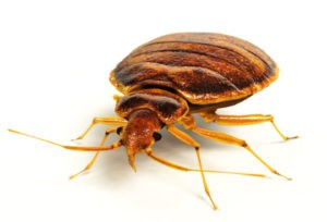 Bed bug exterminator in Omaha, NE