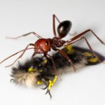 carpenter ant on top of shadow
