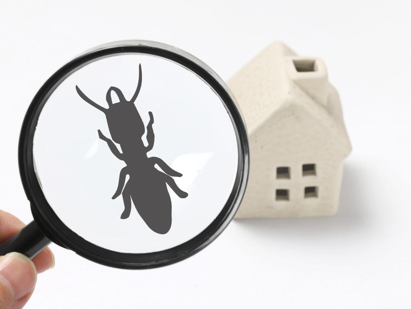 Termite Inspection Omaha