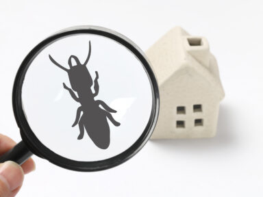 Termite Inspection Omaha