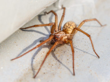 Spider Control in Omaha, NE
