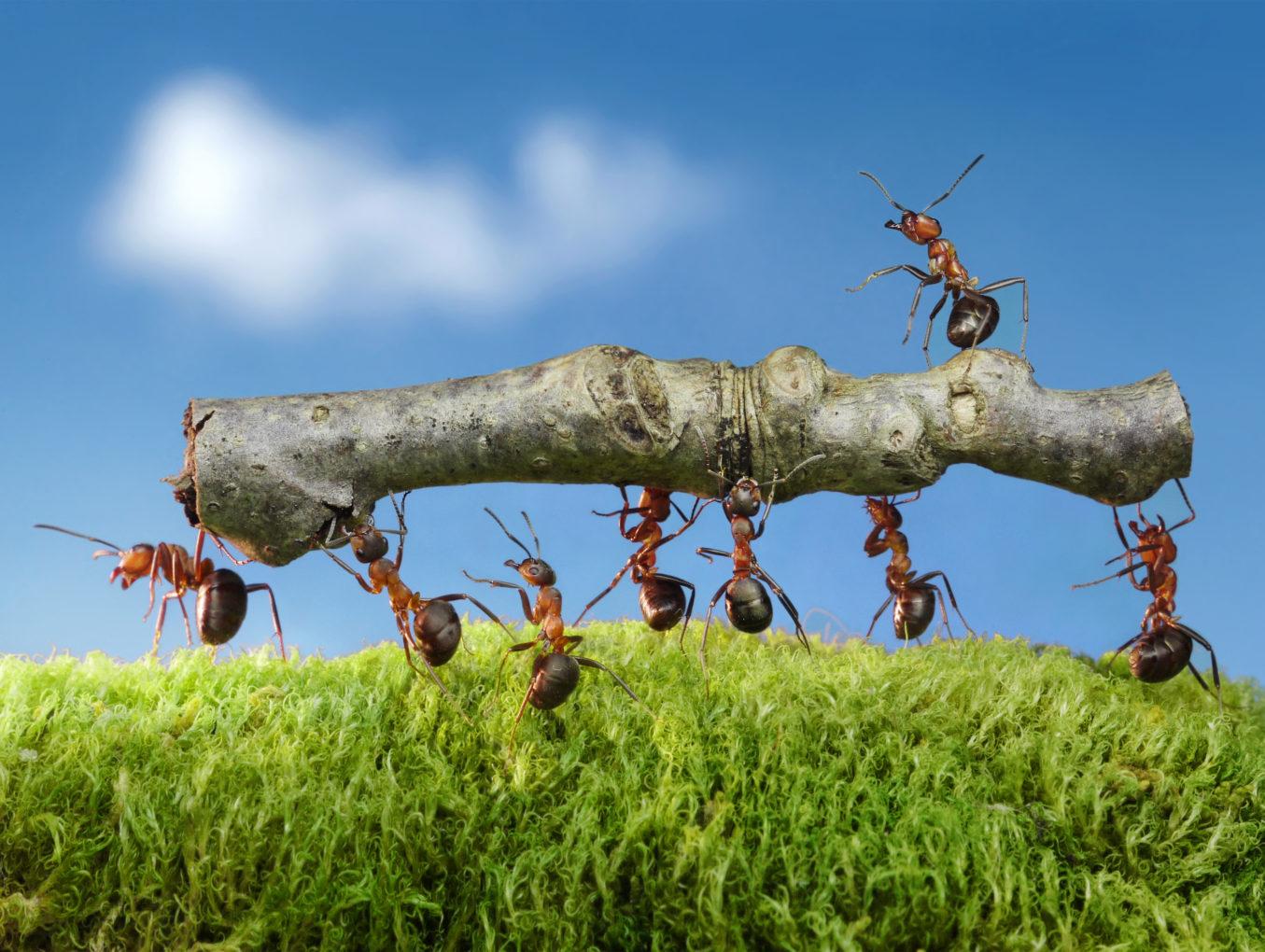 Carpenter Ants Are Back!