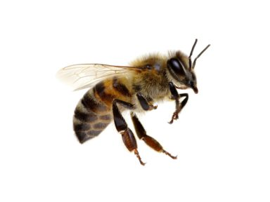 Wasp Removal In Omaha