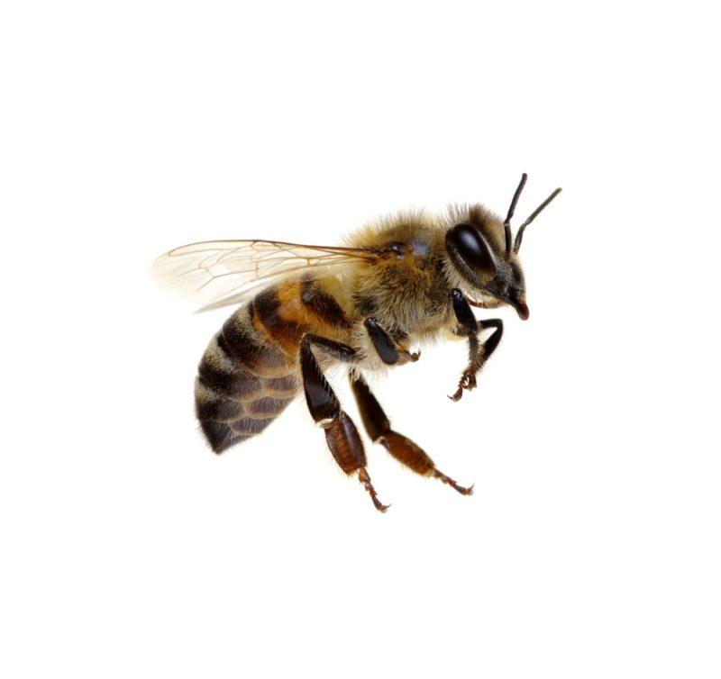 Wasp Removal Omaha