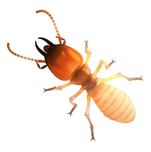 Termite Control Omaha