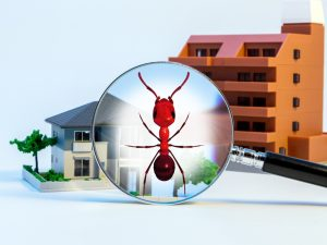 Pest Inspections Are Crucial