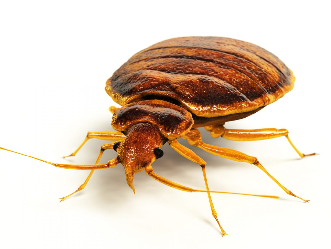 Bed Bug Removal In Omaha