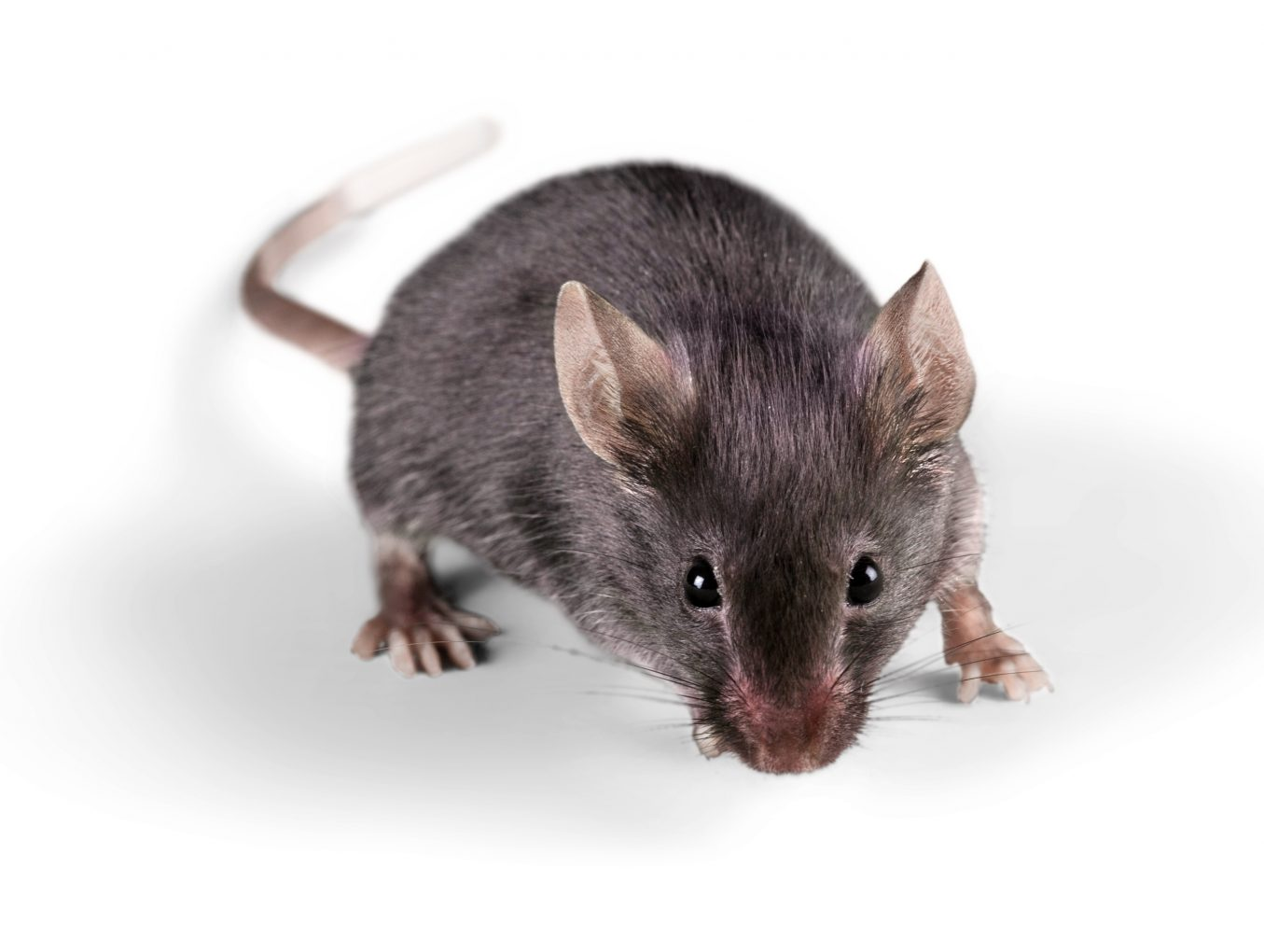 Rodent Extermination In The Omaha Metro