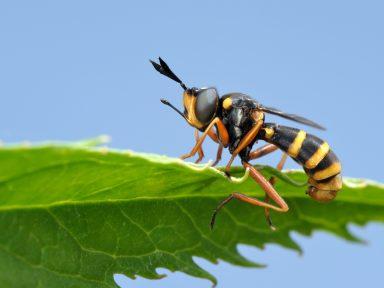 Wasp Control In Omaha